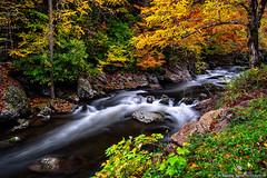 Little River's autumn glory (Cottage Days) Tags: littleriver greatsmokymountainsnationalpark tennessee nationalpark river water autumn trees flora landscape rocks
