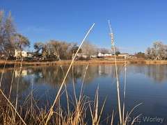 November 8, 2018 - Fall grasses and a pond in Thornton. (LE Worley)