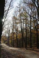 lijn_D711055 (Vogelmelk) Tags: veluwe bos herfst gelderland forest autumn nederland nature natuur