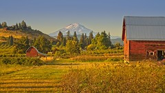 Mt Adams Barns Fruit Valley 1797 B (jim.choate59) Tags: jchoate on1pics barns rural field mtadams mountain autumn fallseason scenic hoodriveroregon fruitvalley goldenhour magichour hss