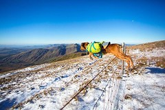 October Bank Holiday weekend was the first and only weekend so far that we've experienced snow in Ireland. We can't wait for more! More snow, more hiking and more spectacular landscapes! • • • • • #hikingdogsofinstagram #irishpassion #exploremore #destina (watson_the_adventure_dog) Tags: october bank holiday weekend was first only far that we've experienced snow ireland we can't wait for more hiking spectacular landscapes • hikingdogsofinstagram irishpassion exploremore destinationearth welivetoexplore weeklyfluff backcountrypaws irish keepitwild awesomeearthpix roamtheplanet petsofinstagram dogsthathike loveireland theoutbound discoverglobe instagoodmyphoto doglover hikingwithdogs instaireland getoutstayout earthofficial ilovemydog heelergram visitireland stayandwander theglobewanderer earthfocus dogsofig