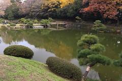 Japanese Garden in Auutumn Color (seiji2012) Tags: 東京 日本庭園 清澄庭園 池 反射 松 紅葉 橋 tokyo furukawagarden koto pond foliage reflection autumn