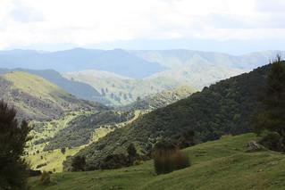 New Zealand Free Range Hunting - Marlborough 25