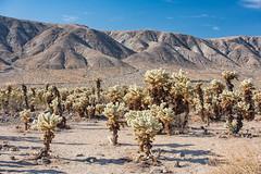 untitled (22 of 28).jpg (xen riggs) Tags: desert california joshuatreenationalpark february2018