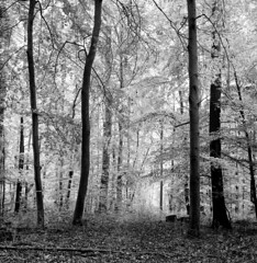 051118005 (salparadise666) Tags: rolleiflex sl66 planar 80mm fomapan 10064 caffenol cl 20min nils volkmer 6x6 medium format square analogue film camera slr landscape wood forest trees hannover region lower saxony germany