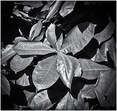 Lomography (Black and White Fine Art) Tags: lomography lomo aristaedu100 kodakd76 holga120s holga sanjuan old san juan oldsanjuan viejosanjuan puertorico bn bw