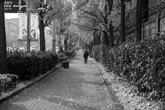 Morning Walk (sydbad) Tags: morning walk sony sonya7 ilce7mk2 sel55f18z itaewon bw blackandwhite outside fall southkorea alienskin