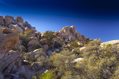 Joshua Tree#4 (Alan Headland) Tags: joshuatree desert trees sand rocks mountains sky california usa