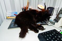 November sällskapet (explored) (Sina Farhat) Tags: light ljus desktop skrivbord wacom tablet katt cat sleeping sover november fs181111 fotosondag gothenborg göteborg sweden sverige 031 canon50d sigma1020456 canon580exii flash blixt ultrawide raw photoshopcc