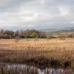 Wetlands thumbnail