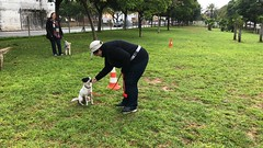 IMG_8533 (Doggy Puppins) Tags: educación canina adiestramiento canino perro dog