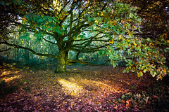 Gradients grove (ArrrV) Tags: orwell country park trees nature autumn foliage plants wildlife pipers vale nikon d3300