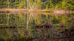 Rat Lake and Bamberton Beach (Every Day Images) Tags: art abstract autumn beach britishcolumbia canon canon6dmark2 calm canada coast daybreak discoverbc erniedickey explore explored explorebc flickr forest googleserch googleearth fog sharevi view yyj sky skyline lakes morninglight nature natural ocean morning plant pacific path reflection reflections rainforest space travel trees summer vancouverisland victoriabuzz victoria west westcoast waves wildlife