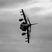 HARRIER PULLING VAPES FLASHING THE TAILPIPES
