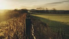 Early mornings..hff xx (shona.2) Tags: scotland sunshine barbedwire path field sunrise morning frosty misty fencefriday hff