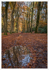 Reflection after rain (Mariannevanderwesten) Tags: reflection reflectie water rain autumn autumncolours herfst herfstkleuren nature natuur nikon forest bos regen