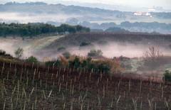 good morning 2019 (lualba) Tags: vinyard weinberg mist nebel landschaft landscape extremadura spanien