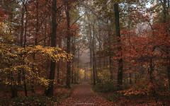 Autumn (titidylan) Tags: tamron 70d canon nature woods automne autumn colors couleurs belgique buggenhoutbos