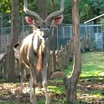 night safari thumbnail
