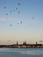 God morgon, Stockholm! (Helena de Riquer) Tags: estocolmo stockholm suecia sweden riddarholmen balticsea marbáltico costaatlánticacruiseship amanecer sunrise escandinavia schweden suède sverige gavines seagulls gaviotas scandinavian 2009 flickr nikon nikone4200 helenaderiquer europa europe