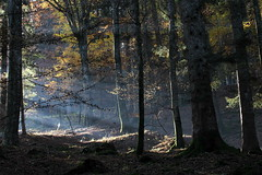 Magia (lincerosso) Tags: foresta forest cansiglio campon autunno luce ombra bellezza armonia magia