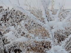 Frozen stuff (lezumbalaberenjena) Tags: avalon orleans winter invierno frio froid cold nieve niege snow ice lezumbalaberenjena