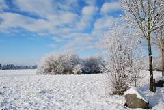 Ich pries des Lenzes holde Wonnen (amras_de) Tags: sylterstrase wiesbaden dotzheim sauerland schnee snow lumi nix snø sneeu nieu snijeg neu sníh sne nego nieve elur neige sneachta hó snjór neve schnéi sniegas sniegs sneeuw nèu snieg zapada nivi snaw sneh sneg snö kar winter hibierno zima hivern vinter vintro invierno talv negu talvi hiver geimhreadh tél vetur inverno hiems wanter žiema ziema ivèrn iarna mmernu kis