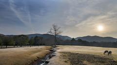 奈良公園 (Sam's Photography Life) Tags: 京都 奈良 大阪 奈良公園 晨光 日出 風景 尼康 自然 landscape nature nikon d850 20mm sun rise