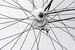 #Crossings #Black&WhiteWednesday (aenee) Tags: aenee nikond7100 nikkor50mm118d 7dos blackwhitewednesday crossings snow sneeuw bw zwartwit byciclewheel fietswiel bycicle fiets spokes spaken whitebackground witteachtergrond pse14 dsc9252 20190123