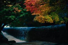 2018.11.5: shizutani school (Nazra Z.) Tags: shizutanischool 閑谷学校 bizen okayama japan raw vscofilm autumn leaves colo