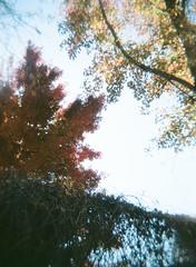 01010013 (JPinNV) Tags: holga portra160 fall colors