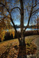 19-Britzer Garten_181116_N- 11 (sigkan) Tags: deutschland berlin britzergarten hdr nikond700 nikon2485mmf284