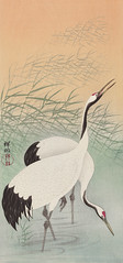 Two cranes (1925 - 1936) by Ohara Koson (1877-1945). Original from The Rijksmuseum. Digitally enhanced by rawpixel. (Free Public Domain Illustrations by rawpixel) Tags: pdproject21batch2x otherkeywords tagcc0 animal antique art asian bird cranes drawing illustration japan japanese koson museum name ohara oharakoson old paint rijksmuseum vintage