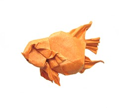 Blood Parrot Cichlid (folding~well) Tags: origami paper folding fish