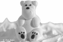 Macro  Mondays White on White (Chris Scopes) Tags: macromondays whiteonwhite christmas cake decorations bear sugar