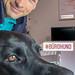 Schwarzer Bürohund legt Kopf auf Schreibtisch mit Tastatur an dem Mann arbeitet