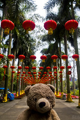 Photo (Adventures With Teddy) Tags: teddy adventures with adventureswithteddy adventure travel bug blog china nature bear stuffed chinese lantern walkway international internationaltravel photo photography photographers tumblr original red palm trees
