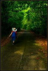 Kubah National Park (VERODAR) Tags: kubah kubahnationalpark sarawak borneo kuching jungle forest rainforest hiking morninglight nature nikon verodar veronicasridar