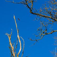 Warburg Reserve, Bix Bottom (FlickrDelusions) Tags: warburgnaturereserve bbowt oxfordshire redkite kite aonb chilterns naturereserve chilternhills henleyonthames england unitedkingdom gb