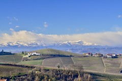 Piemonte (Waldek P.) Tags: italy langhe piemonte włochy piemont wino wine vineyard winnica barolo nebiolo muscat