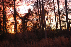 Edge Of The Woods At Sunset. (dccradio) Tags: lumberton nc northcarolina robesoncounty outdoor outdoors outside nature natural march spring springtime sunday sundayevening sundaynight evening silhouette tree trees treebranch branch branches treebranches treelimb treelimbs sky colorful colorfulsky sunset sunsetsky clouds pinkclouds bluesky nikon d40 dslr scenic woods wooded forest beauty beautiful pretty landscape