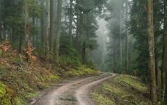 Lonely (Guido de Kleijn) Tags: blackforest schwarzwald schwarzenberg schwarzenbergbaiersbronn schwarzenbergimmurgtal guidodekleijn nikond500 nikon nikon1680f28 germany badenwürttemberg