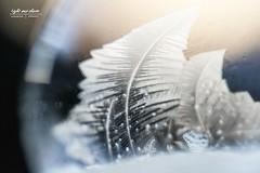 Eisblume in gefrorener Seifenblase (Light and shade by Monika) Tags: frozen ice frozenbubble closeup macro