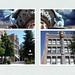 Helena Montana - USA - Atlas Building - Salmanders