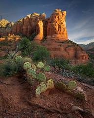 Sugarloaf Sunrise (andrewpmorse) Tags: sedona arizona unitedstates southwest desert sugarloaf sunrise cactus cacti rocks spire mountain morning landscape landscapes canon 5dmarkiv 5div canon5dmarkiv 2470f28lii leefilters leelandscapepolarizer