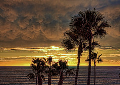 Sunset Clouds 15-1-14-19 (rod1691) Tags: oceanside california sunset clouds palmtrees beach ocean