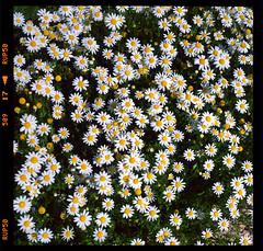 Scan 5 (Champy88) Tags: yashicamatlm yashinon80f35 yashica velvia velvia50 fujichromevelvia50rvp scanviewscanmate5000 scanmate5000 escanerdetambor drumscanner landscape slide 6x6 6x6only 120film 120 mediumformat formatomedio film filmphotography filmisnotdead square squareformat e6 analog diapositiva color