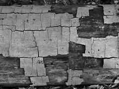 _A172890_E-2 (☁ ▅▒░☼‿☼░▒▅ ☁) Tags: olympus omd em5mkii minolta rokkor mecsek woods forest black white blackwhite