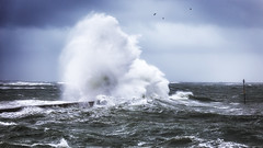 Monster (Ludovic Lagadec) Tags: lomener water waves wave oiseaux oceanscape ocean tempete storm bird bretagne breizh brittany beach marin mer marée morning morbihan ploemeur