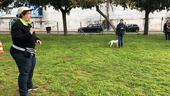 IMG_8575 (Doggy Puppins) Tags: educación canina adiestramiento canino perro dog